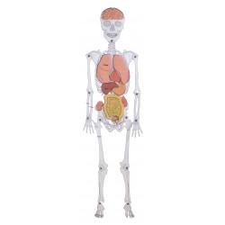 El hombre esqueleto.